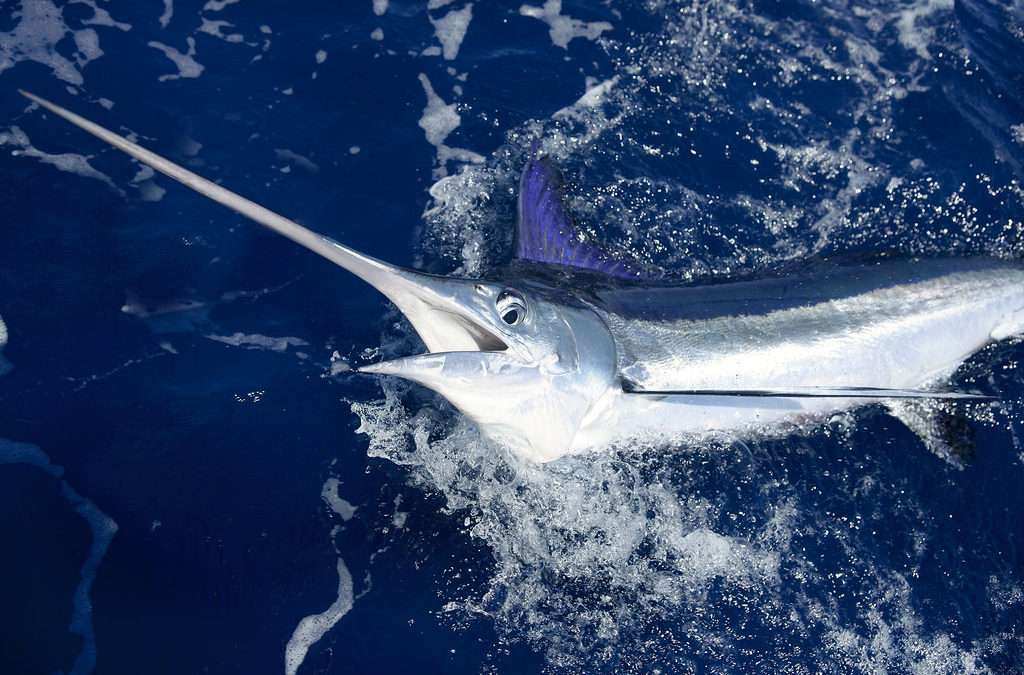 BILLFISH TOURNAMENT – no online sign ups .. contact Anthony or Randy to sign up for tourney!